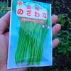 今年は野沢菜漬けに挑戦してみた!やるからには菜っぱの栽培から。