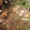 薪割りはテーマを持って 親切は他人の為ならず Taking a theme to split woods