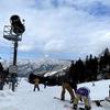 スキーは好きですか?@滋賀県「グランスノー奥伊吹」