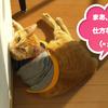 ココちゃんの日向ぼっこパート2(^^♪(293日目)