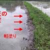 水が減っていたので畦の水漏れ対策を行いました!