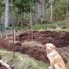 粘土質の畑にバークマルチを入れる
