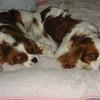 ペットが子どもに与える影響「子供が生まれたら犬を飼いなさい」愛情と責任感