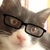 猫の知能指数は?人間だと何歳くらい?