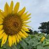 【豊後高田市】くにさき六郷温泉 花いろ温泉~市内を全力で満喫した8月最後の日曜日