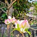 花とネット動画大好き❗️ kazutatanの雑記ブログ
