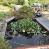 池の衣替え