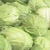 記録的な猛暑や長雨の影響などで葉物野菜を中心に値上がり!キャベツは平年比+65%・レタスは+16%・ほうれんそうは+26%・大根は+71パーセント・きゅうりは+40%に!