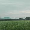 蕎麦の花越しに見る筑波山