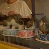 【一日一枚写真】子猫達の食事風景【一眼レフ】
