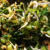 【つくれぽ1000件】大根の葉の人気レシピ 20選|クックパッド1位の殿堂入り料理