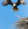 鷲のように - like eagles
