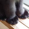 今日の黒猫モモ&白黒猫ナナの動画ー783