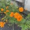 道端に咲く花。