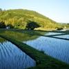 京都嵯峨野 田んぼの景色に郷愁を感じるのは何故だろう?