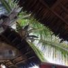 アフリカ・サーフィンサファリは遠く、夢の向こう、、、