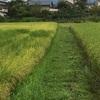 畦畔草刈りと銀線マクワウリ