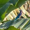ケンクラチャン往還の鳥
