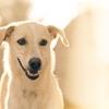 フィリピン留学日記(3)犬がうるさい
