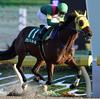 2017年武蔵野S GⅢ インカンテーションで三浦皇成騎手が昨年7月以来の重賞制覇