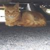 台風24号&台風の卵の話・個人事業主の開業届けの話・めっちゃ可愛い猫ちゃんの話!詰め込み過ぎて何のブログが分からなくなったぞwww