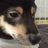 【愛犬のアレルギー性皮膚炎】検査をしてもアレルゲンが特定できない!?診療の流れと治療について