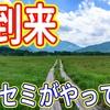【夏到来】セミの登場!