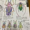 ユニークな昆虫たち
