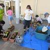 緑化ボランティア:昇降口前にきれいな花が