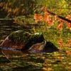 秋の彩を感じる白駒池の原生林を散歩しました