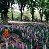 【第2章】埼玉でおすすめの観光スポット・自然・グルメ  18