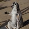 独断と偏見で選んだメルボルン動物園の総選挙