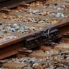 もう一つの鉄道員 ~影で「安全輸送」を支えた地上勤務の鉄道員~ 第二章 見えざる「安全輸送を支える」仕事・過酷な猛暑の鉄路【後編】