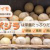【南国のフルーツ】ビタミンCたっぷり!チクー(サポジラ)の食べ方・栄養価と効能をご紹介
