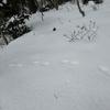 ◆'19/02/02     高館山②…キョロキョロしながら ゆっくり山頂へ。