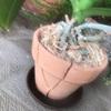 強風で植木鉢が落とされた!