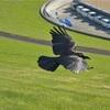 【一日一枚写真】黒い翼【一眼レフ】