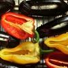 野菜の料理教室 7月