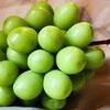 皮まで食べられるシャインマスカットの魅力!栄養満点で種がないおいしい葡萄の旬、値段、保存方法もリサーチ