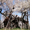 大泉行きと山高神代桜