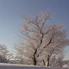 【自然写真】ホテルフォレスタ鳥海  1月の一枚