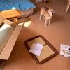 犬用ベッドとトイレトレーを買いました。質素な弁当。生協のシナモンロール。