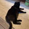 【広島県・尾道】猫好き集まれ!!猫の細道を徘徊してきたにゃ~