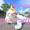 「福井」ネコ住む寺に癒しを求め...秋の晴れ間にまったりツーリング「第1部(ninja650)」