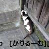 2018/12/09 猫ハナ(はな)写真 KIMG0249