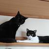 今日の黒猫モモ&白黒猫ナナの動画ー839