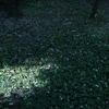 546  木漏れ日