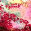 兵庫県西宮市)北山貯水池→甲山森林公園→阪急甲陽園駅。紅葉きれい。