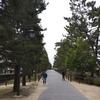 草加松原遊歩道をサイクリング