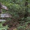 雨上がりの赤良木峠 峠道の森